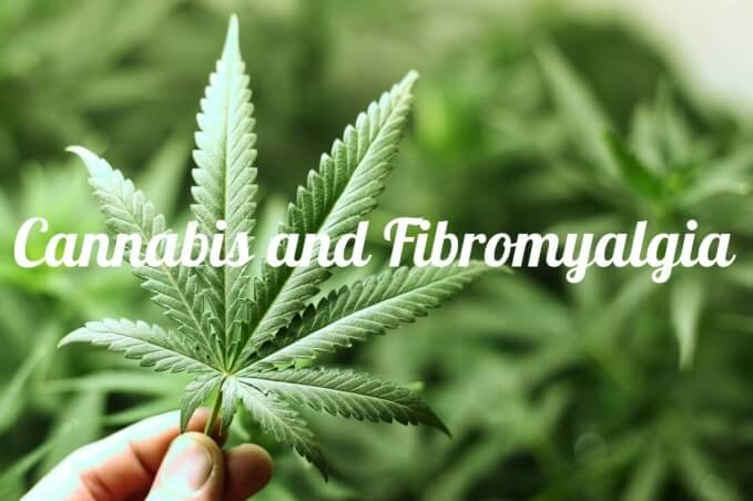Options For Legally Using Cannabis To Treat Fibromyalgia...