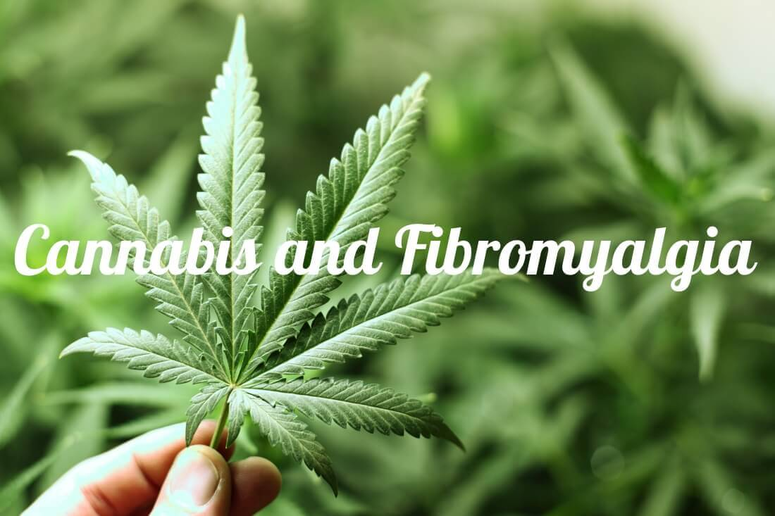 how to buy marijuana online without medical card